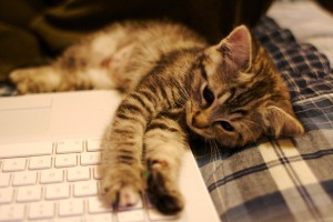 ぼーっとした猫の写真