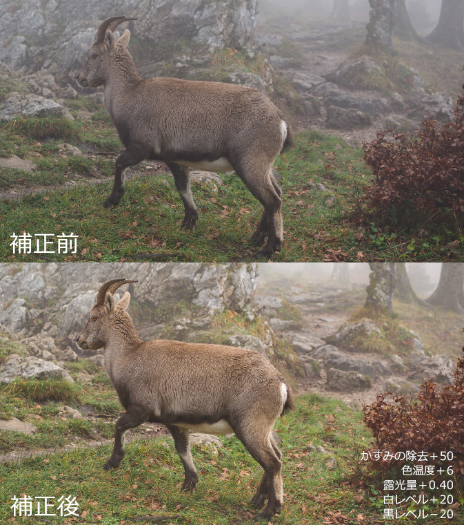 鹿の画像(加工前後)