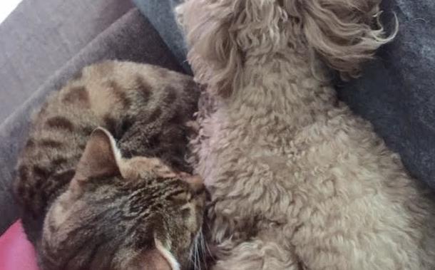 我が家の猫と犬