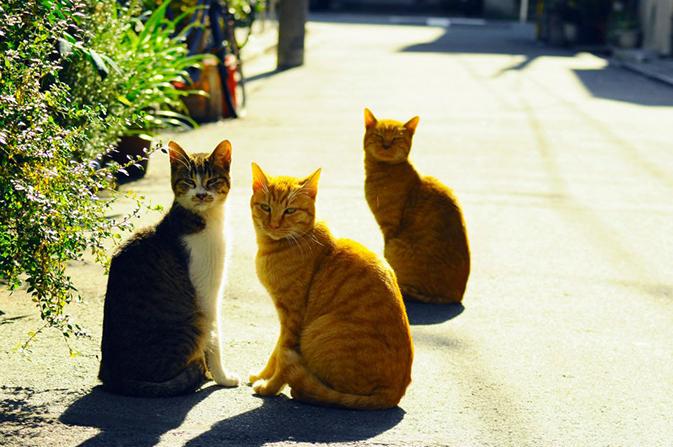 猫写真01