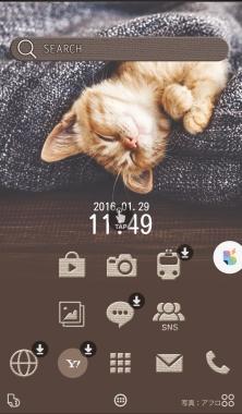 buzzHOME ホーム 猫