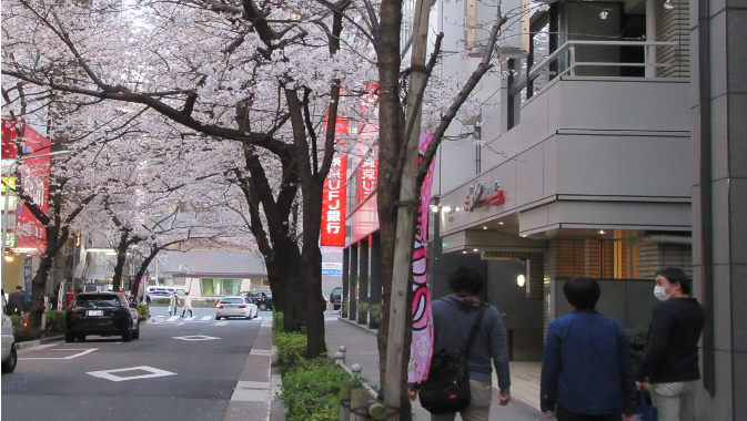 桜満開の帰り道