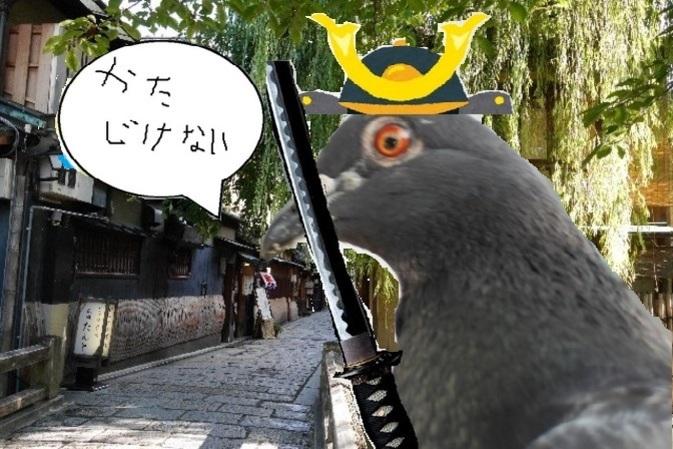 東海道の鳩